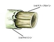 シルクプロテイン01